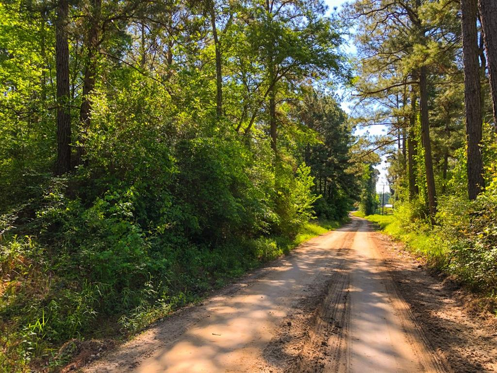 1st Time Open Market Offering!!! Own a piece of Trinity Forest! Selective breakup for this historic forestry tract. Great location.  Excellent public road frontage & access with excellent internal road system for forestry operations & recreation.