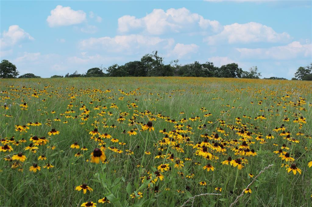 The Smetana Ranch is comprised of +/-275 acres located in northwest Bryan a short distance from the RELLIS campus, and approximately 10 miles from Texas A & M University.  Tracts this size with development potential rarely come available in Brazos County, with over 1,000' of frontage along Smetana Road.  The land is 50% improved pasture and 50% wooded with large pecan tree bottoms and the eastern line partially bounded by Thompson Creek, which attracts a large amount of wildlife as do numerous stock ponds scattered around the property. The ranch has historically been utilized for hay production, cattle and pecan harvesting, as well as equestrian trail riding.