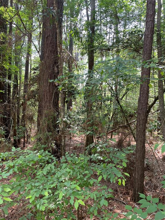 Not far from downtown Willis yet secluded! Heavily wooded 3+ acreage. There also appears to be marketable timber on the property. Willis ISD school district.