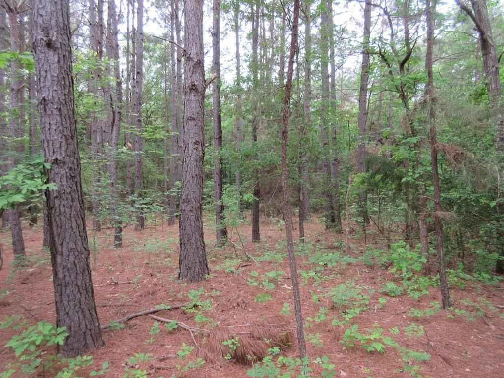 Excellent property for your new homestead. The land is covered in Oak & Pine trees waiting on you to pick a spot to build your dream home. Several building sites available. Wet weather creek crosses part of the property with possible pond site. Good road frontage on EFM 321 & ACR 4441. Great Location!