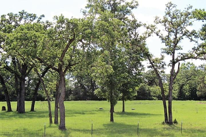 TBD County Road 477, Centerville, TX 75833