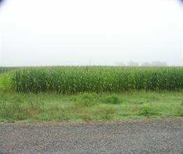 00 Guy Duty Road County Road 15, Damon, TX 77430