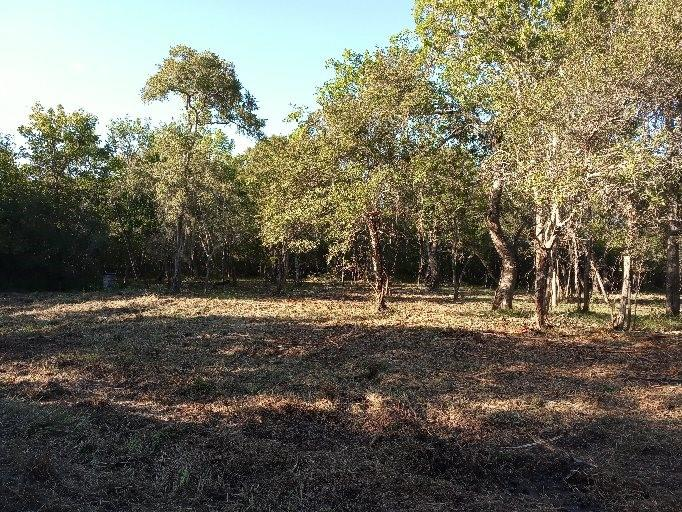 11.35 Acres two acres cleared.  Property is fenced has electric. You have your privacy. Buyer will need septic and well. Great for hunting, yet still close to the ICW and Caney Creek for fishing, or beach for shell hunting. Old trailer has been removed.