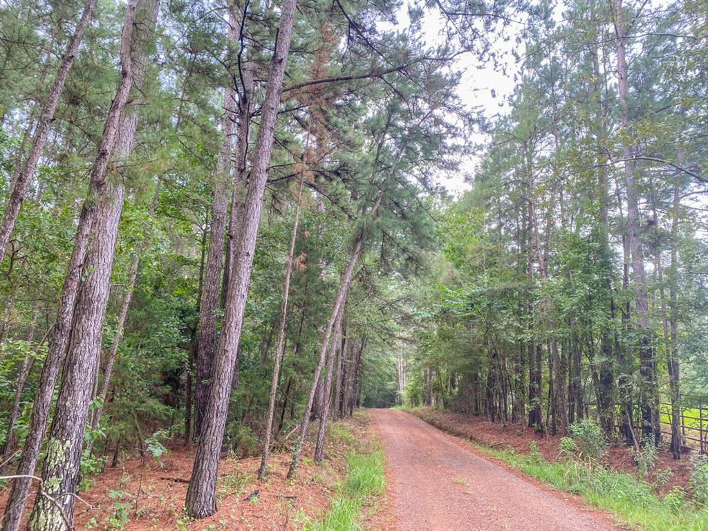 Heavily wooded in pine/hardwood and private at the end of a non-thru county road. Easily accessible in nice area outside of Appleby, TX and ~5 miles from Nacogdoches, TX. Electricity available and possibly water (subject to confirmation). Sloping terrain with small creek drain. Excellent homesite and/or recreation.