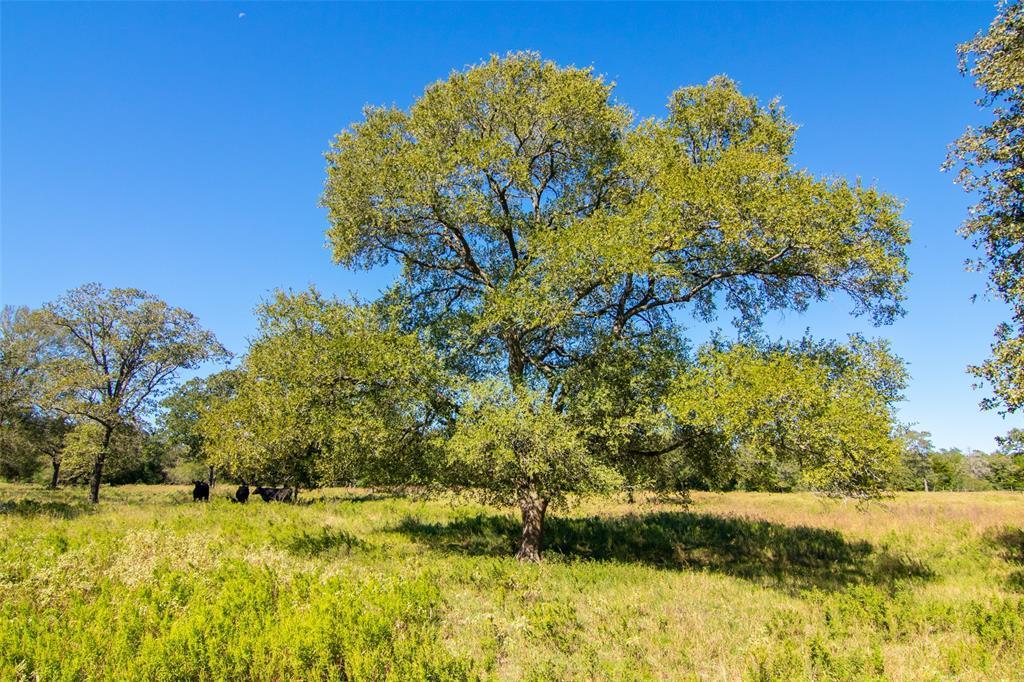 19 Hunt Lane, Waelder, TX 78959