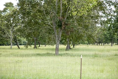 000 FM Hwy 3342, Shepherd, TX 77371