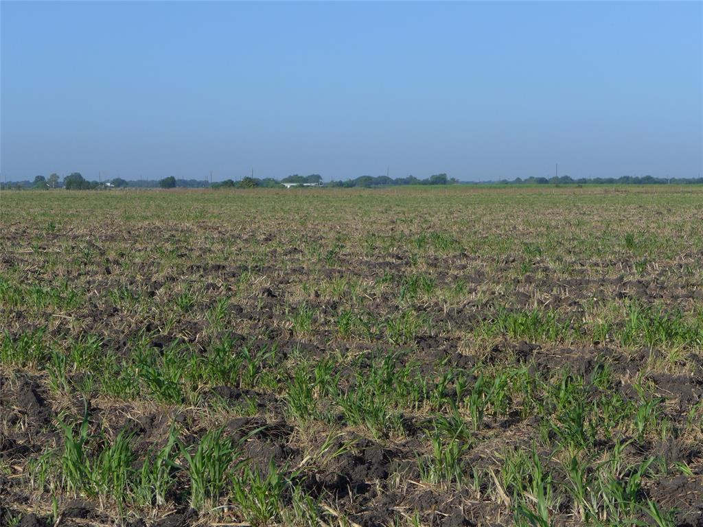 A nice 40 acre tract that is currently being farmed for cotton and is Ag Exempt. There is access to the property from BJ Dusek Road that is part of the 40 plus acres that leads to the fertile farm land where the old homestead once stood.  Not in the flood zone per the current maps and the land drains nicely over to the  drainage creek on the east end of the property.  Please verify any permit or development requirements through the Fort Bend County office.