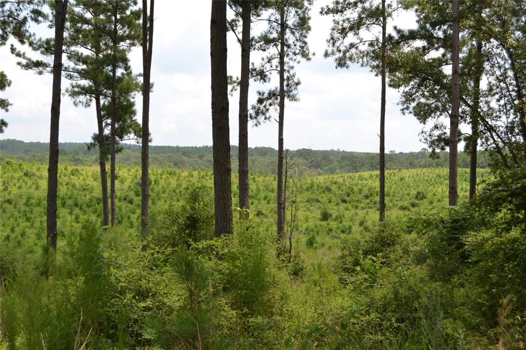 GORGEOUS VIEWS! Come see this classic East Texas land tract with amazing terrain and views! You'll enjoy the rolling hills this property has to offer. Much of this property is bordered by Davy Crockett National Forest while Austin Branch meanders through a portion of this 383.758-acre tract. You will also find a large, secluded lake that should be very attractive to waterfowl as well as provide a water source for game animals. The owner reports an abundance of wildlife from deer, hogs, and foxes. Nestled on top of one hill is small unfinished hunter's cabin. There is a nice mix of hardwood and pine trees throughout this property. If you're looking for a great recreational tract for weekend living, get-a-ways, and great hunting for your family and friends, come see this property today!