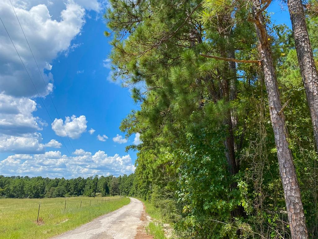 Tract A1-2; First-time open market offering for historically owned industry forestland. Beautiful rolling topography with pines and hardwoods. Near Lake Livingston and public boat ramp. Great shapes for utilization. Lake sites. Great access/frontage allows for many uses. (ie; recreation, hunting, high fence, RV park, leisure ranch, development, etc…) Trinity Rural Water Supply has well and road access. Water and Electric available by extension and confirmation. Access on Thornton 1 Rd., or, Fm 355, or, internal 60' easement road. Properties fronting the easement road are responsible for the maintenance of said road.