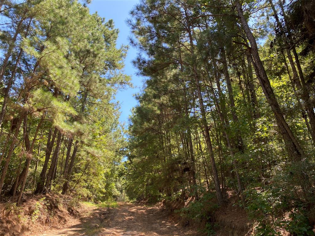 Tract A1-3; First-time open market offering for historically owned industry forestland. Beautiful rolling topography with pines and hardwoods. Near Lake Livingston and public boat ramp. Great shapes for utilization. Lake sites. Great access/frontage allows for many uses. (ie; recreation, hunting, high fence, RV park, leisure ranch, development, etc…) Trinity Rural Water Supply has well and road access. Water and Electric available by extension and confirmation. Access on Thornton 1 Rd., or, Fm 355, or, internal 60' easement road. Properties fronting the easement road are responsible for the maintenance of said road.