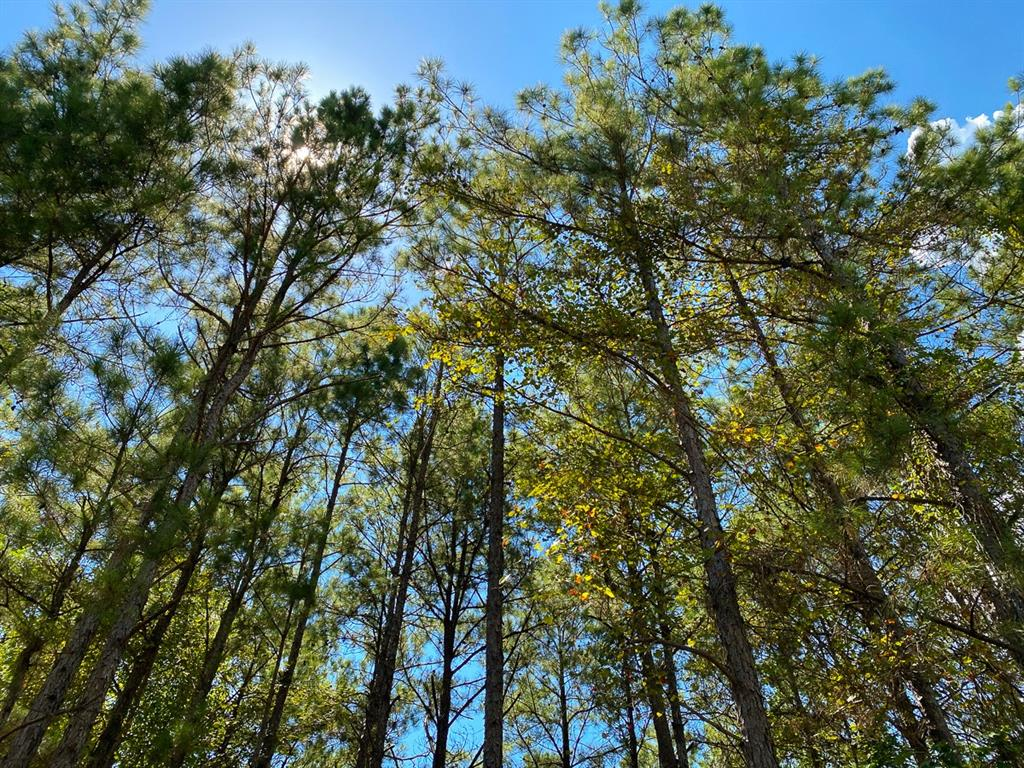 Tract A2-7; First-time open market offering for historically owned industry forestland. Beautiful rolling topography with pines and hardwoods. Near Lake Livingston and public boat ramp. Great shapes for utilization. Lake sites. Great access/frontage allows for many uses. (ie; recreation, hunting, high fence, RV park, leisure ranch, development, etc…) Trinity Rural Water Supply has well and road access. Water and Electric available by extension and confirmation. Access on Thornton 1 Rd., or, Fm 355, or, internal 60' easement road. Properties fronting the easement road are responsible for the maintenance of said road.
