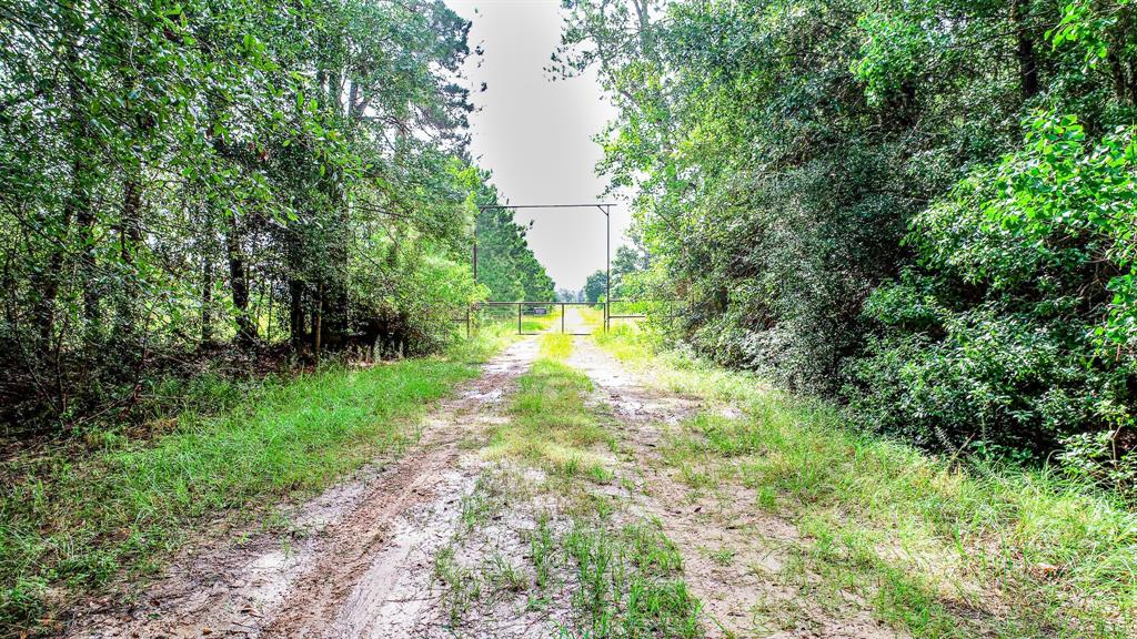 TBD Bob Williams Road, Thicket, TX 77585