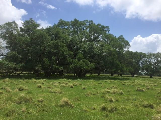 This property is perfect to build your new home and have your perfect ranch setting. Massive mature oaks and pecan trees. Fantastic hunting! We have white tail deer, hogs, and more. Small creek runs thru property with adorable wooden bridge.  Call now for your private viewing. Only 45 minutes from Downtown Houston!