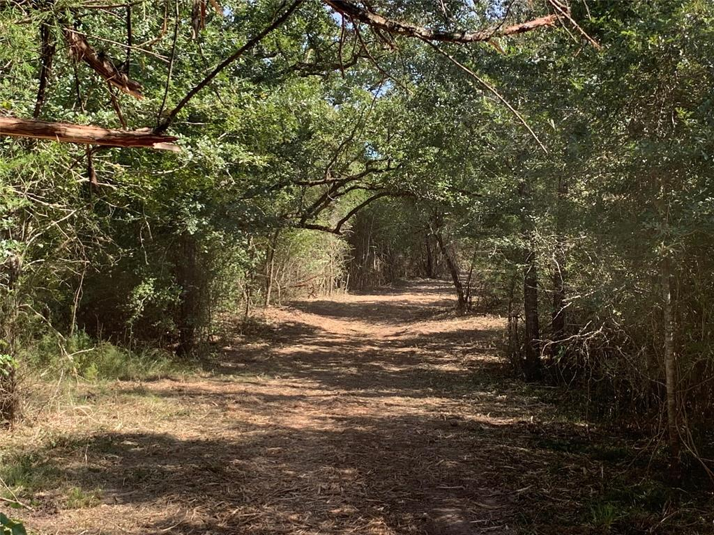 Beautiful 19.58 acres in Grimes County.  Public water, electric and high speed internet are available.  Scattered trees and open pasture make for a perfect property to build your forever home or just a weekend retreat.  Livestock welcome, Ag exempt, and only 20 minutes to College Station.  Drive out anytime to see!