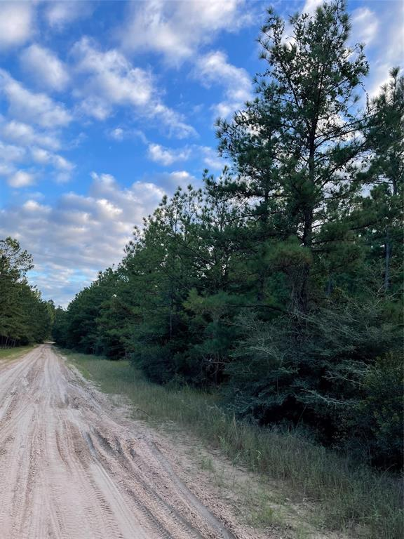 Welcome to what could be your future home in Beautiful East Texas. 22 acres filled with majestic pines sits right across from the National Forest. Come home to Deer and other wildlife grazing all around you. No restrictions here, just peace and quiet, and all the privacy you can stand. No worries though, the local Grocery store, hardware store, and restaurants are only 5 miles down the road! So if you are looking for a place to build, escape to, or just wanting your own spot to hunt…this could be it!