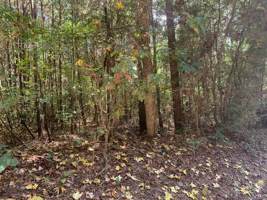 Beautiful acreage in quiet country setting.  This two wooded tract property is located near Hwy 156 and close to Lake Livingston.  Come enjoy the country setting and go fishing on the lake.  Many deer and wildlife on this property.  Build your dream home in the country.