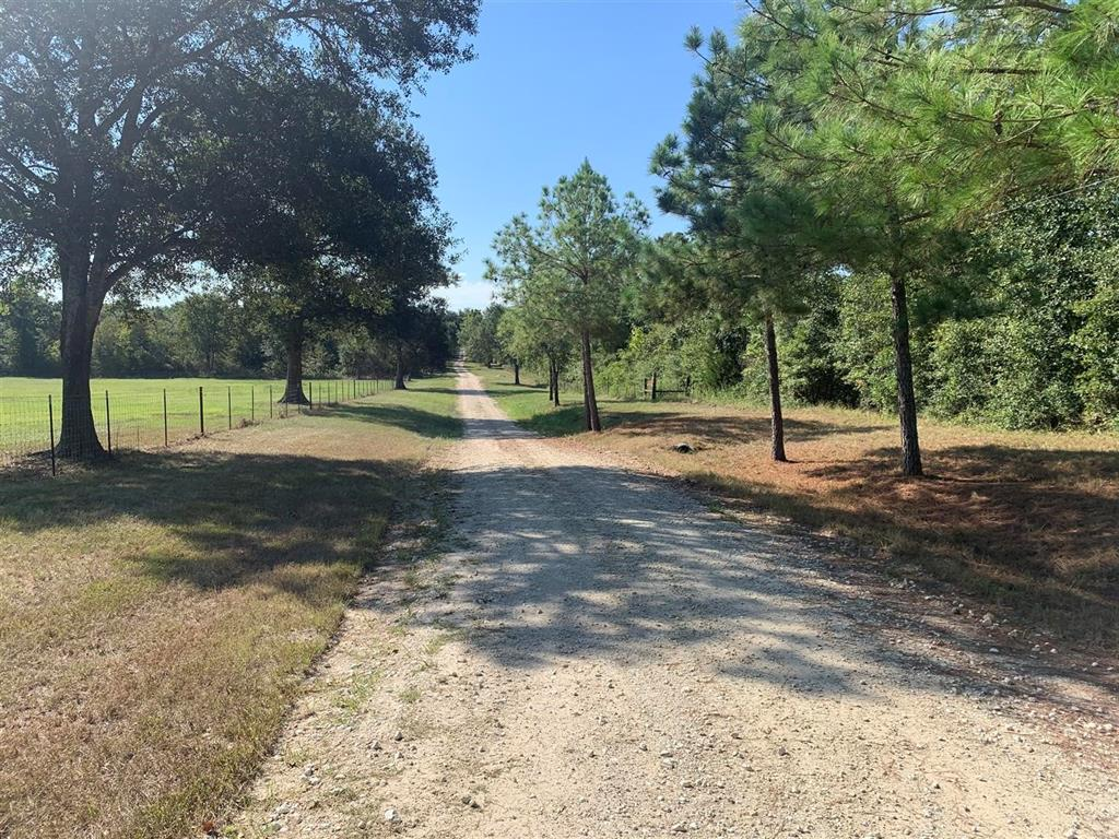 Trails End Homestead - what you have been looking for. 12.5 acres of undeveloped land with a timber exemption. There are no restrictions. Bring your dreams. It's time to move to the country! Power is available at the front of the property. Fiber-optic high speed internet is located at the front of the property. Located in Anderson-Shiro CISD! There are no improvements on this tract of land.