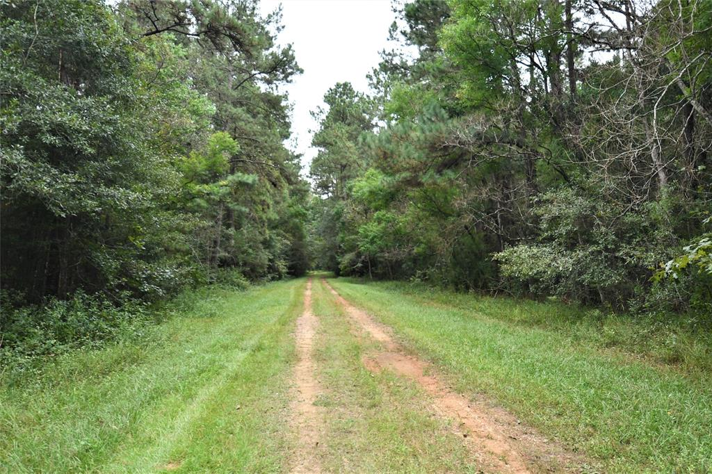 Enjoy the great outdoors? This large acreage tract is an outdoorsman's dream!  This spacious 321.296 acre tract offers endless possibilities - hunting, recreation or leisure!  Great development tract with lots of road frontage and easy access to Hwy 59(I-69), only 30 minutes to North Houston/Humble.  Community water is available.  Good investment and/or recreational forested acreage within commutable distance of Houston, TX.
