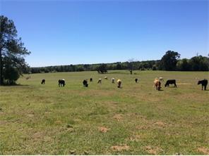 338 frerich road, smithville, TX 78957