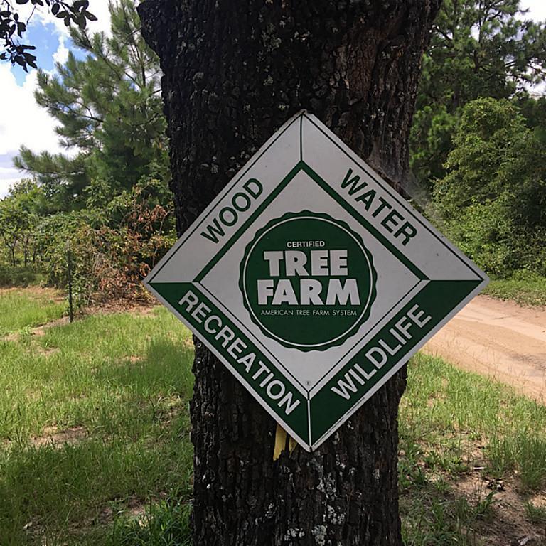 0000 An County Road, Grapeland, TX 77562